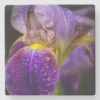 Bearded Iris Coaster