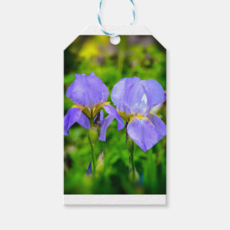 Bearded Iris Gift Tags