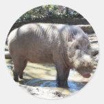 Bearded Pig Portrait Round Sticker
