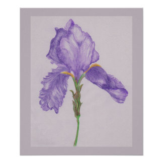 Bearded Purple Iris Poster