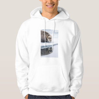 Bearded seal on ice, Norway Hoodie