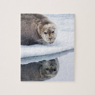 Bearded seal on ice, Norway Jigsaw Puzzle