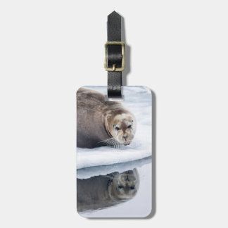 Bearded seal on ice, Norway Luggage Tag