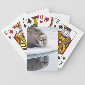Bearded seal on ice, Norway Playing Cards