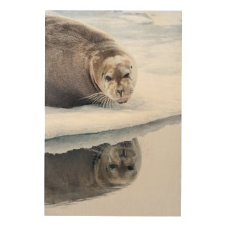 Bearded seal on ice, Norway Wood Print
