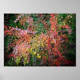 Beatiful Colour Leaf Poster