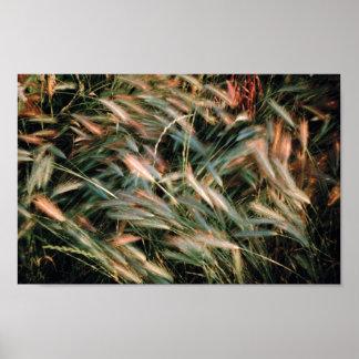 Beatiful Coloured Grass Poster