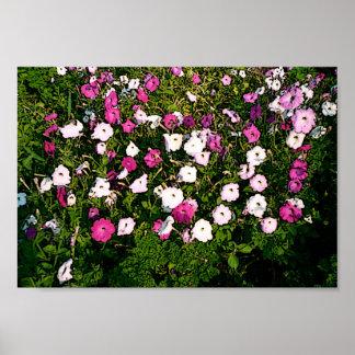 Beatiful Flowers Poster