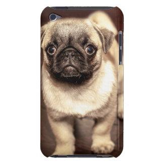 Beau carlin de chiot, chien, animal familier, étui barely there iPod