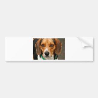 Beau chien de chasse futé de beagle autocollant de voiture