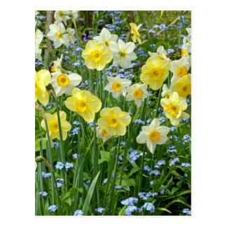 Beau jardin jaune de jonquille carte postale