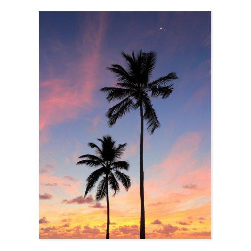 Beau lever de soleil de côte cartes postales