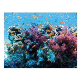 Beau monde sous-marin coloré carte postale