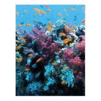 Beau monde sous-marin coloré cartes postales