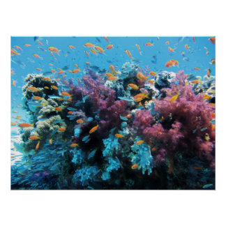 Beau monde sous-marin coloré poster