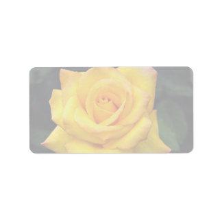 Beau rose grandiflora de médaille d'or, 'Aroyqueli Étiquettes D'adresse