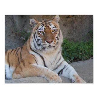 Beau tigre de Bengale Carton D'invitation 10,79 Cm X 13,97 Cm