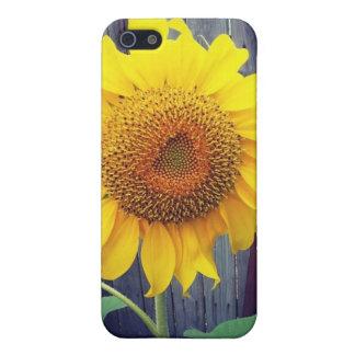 Beau tournesol fleurissant pour l'iPhone 5s Coque iPhone 5
