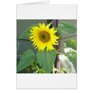 Beau tournesol jaune carte de vœux
