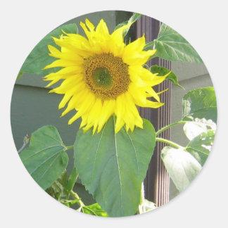 Beau tournesol jaune sticker rond