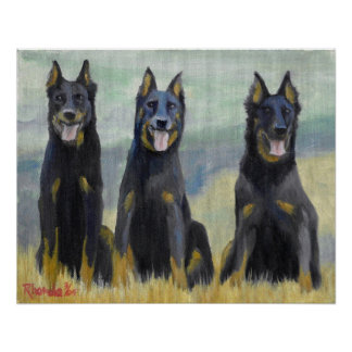 Beauceron Dog Portrait Poster
