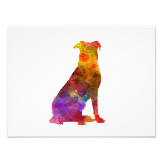 Beauceron in watercolor photo print