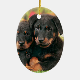 Beauceron Puppies Best Buds Ceramic Oval Ornament