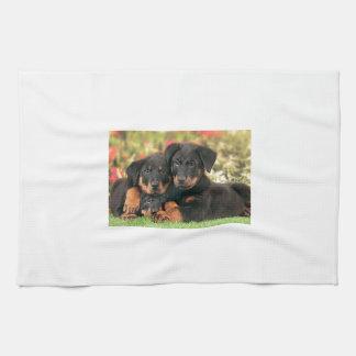 Beauceron Puppies Best Buds Kitchen Towel