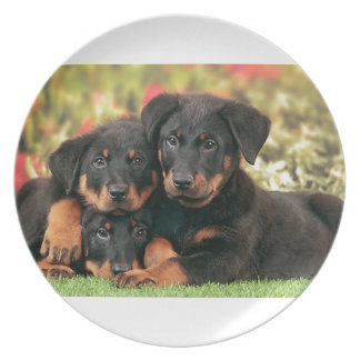 Beauceron Puppies Best Buds Plate