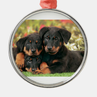 Beauceron Puppies Best Buds Silver-Colored Round Ornament