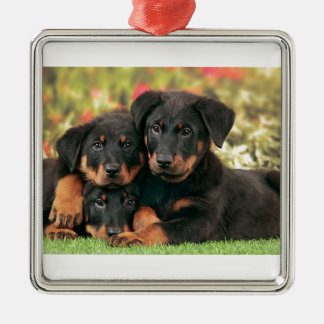 Beauceron Puppies Best Buds Silver-Colored Square Ornament