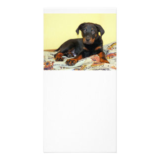 beauceron puppy photo card template