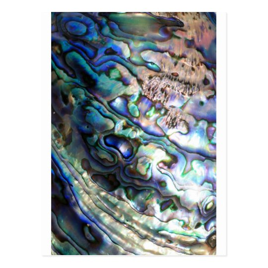 Beautiful abalone shell postcard