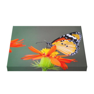 Beautiful African Monarch Butterfly Canvas Print