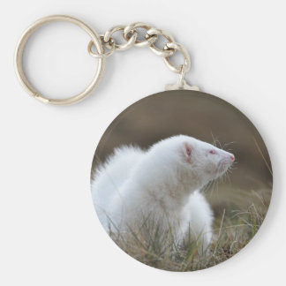 Beautiful Albino Ferret Basic Round Button Keychain