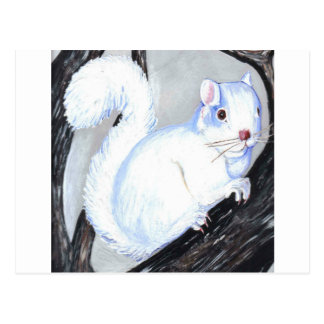Beautiful Albino Squirrel Postcard