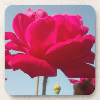 Beautiful Amazing  Rose For the Bride Coasters