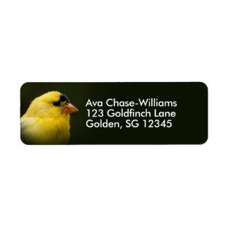 Beautiful American Goldfinch