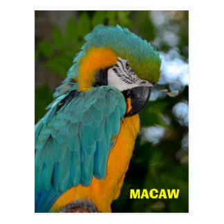 Beautiful and Colorful Macaw Postcard