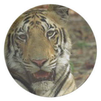 Beautiful and Smiling Tiger Dinner Plates