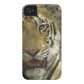 Beautiful and Smiling Tiger iPhone 4 Case-Mate Cases