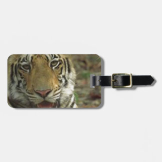 Beautiful and Smiling Tiger Luggage Tag