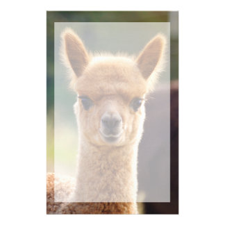 Beautiful Animal Alpaca Stationery