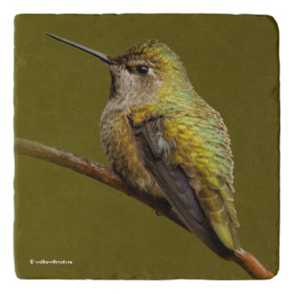 Beautiful Anna's Hummingbird on the Trumpetvine Trivet