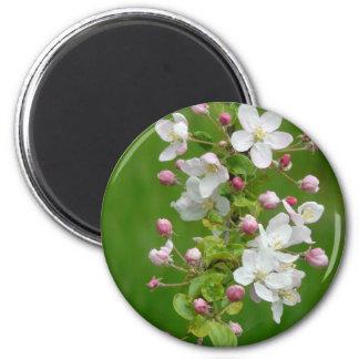 Beautiful apple blossom magnets
