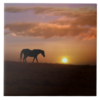 Beautiful Arabian Horse and Sunrise Art Tile
