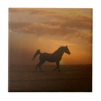 Beautiful Arabian Sunset Art Tile Horse Lover