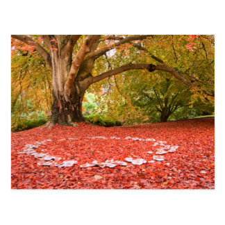 Beautiful Autumn Fall Nature Fairy Ring Postcard