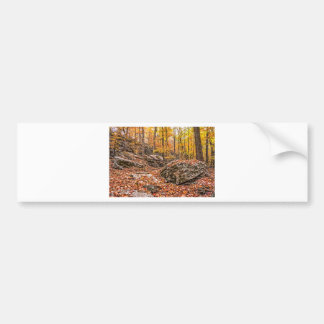 Beautiful Autumn Forest Bumper Sticker