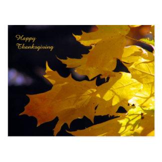 Beautiful Autumn Leaves Thanksgiving Greeting Postcard